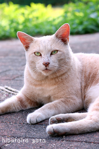 猫写2020(040)