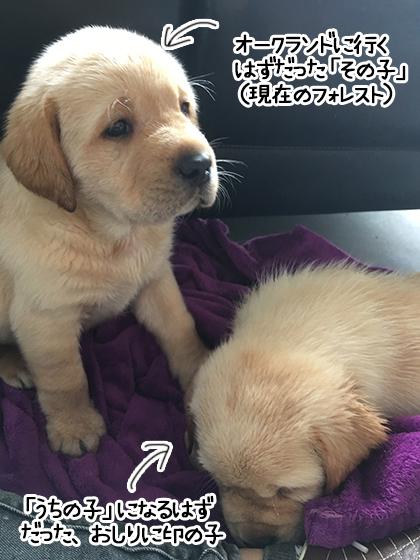 02062021_dogpic2.jpg