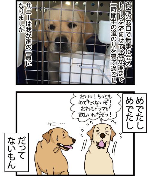 03062021_dogcomic_2.jpg