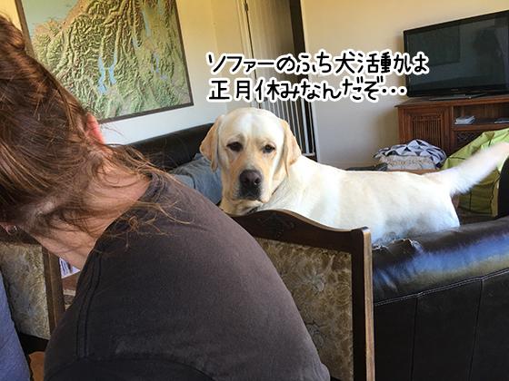 04012021_dogpic1.jpg