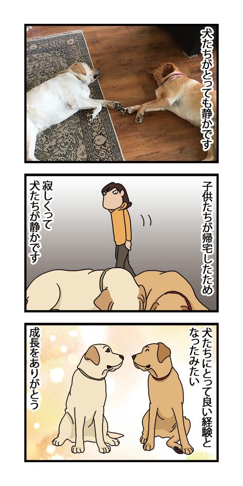 07012021_dogcomic.jpg