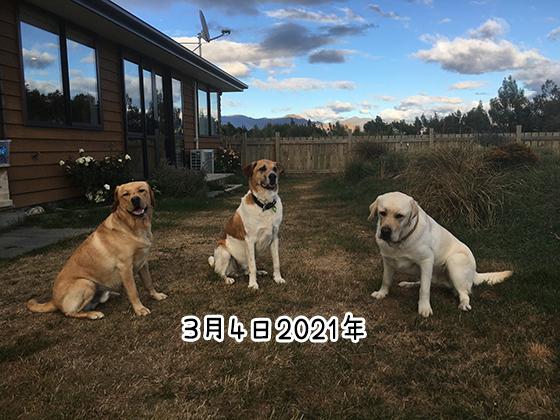 07032021_dog4.jpg