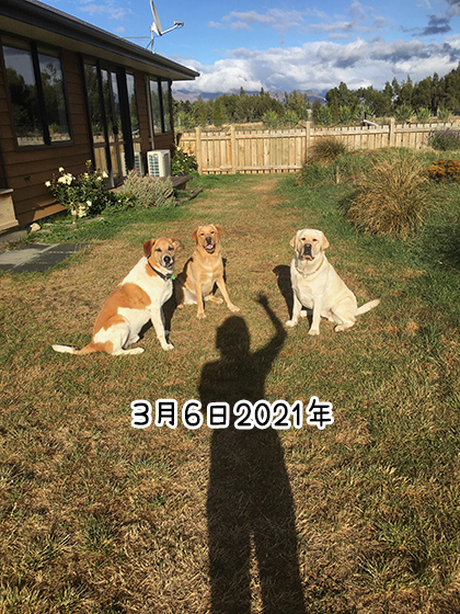 07032021_dog6.jpg