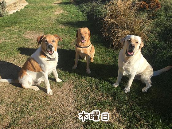 09052021_dog4Thursday.jpg
