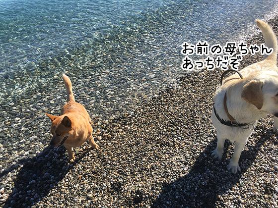 11012021_dogpic4.jpg