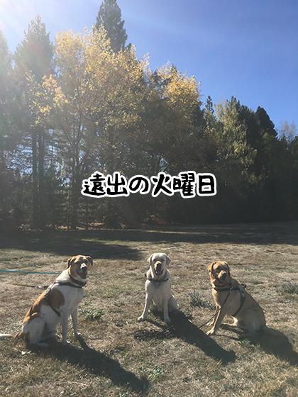11042021_dog2.jpg