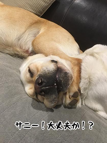 11042021_dog8.jpg