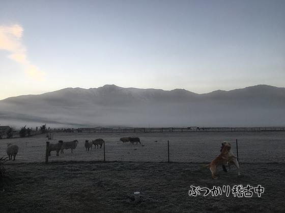 14052021_dogpic1.jpg