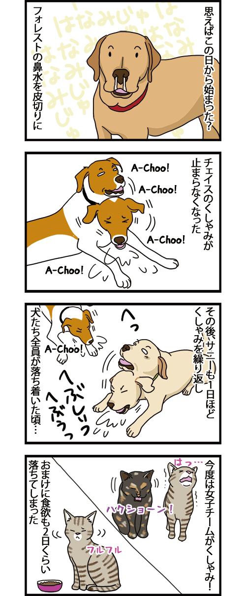 15042021_dogcomic_mini1.jpg