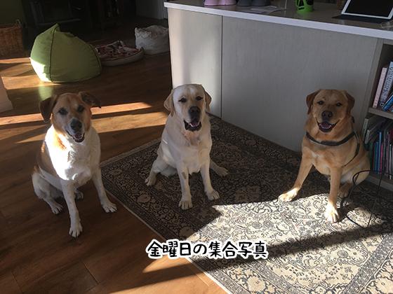16052021_dog5Friday.jpg
