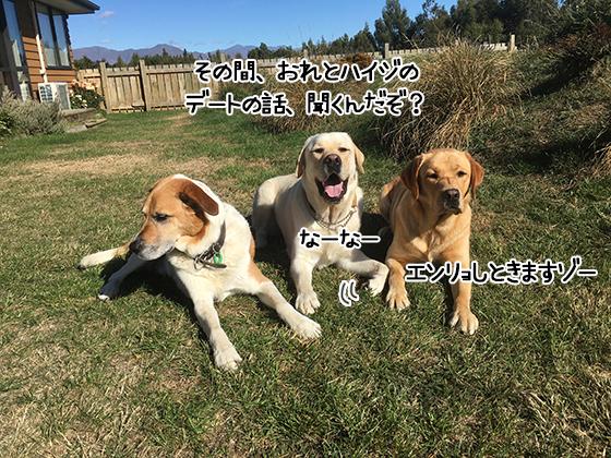 17032021_dogpic5.jpg