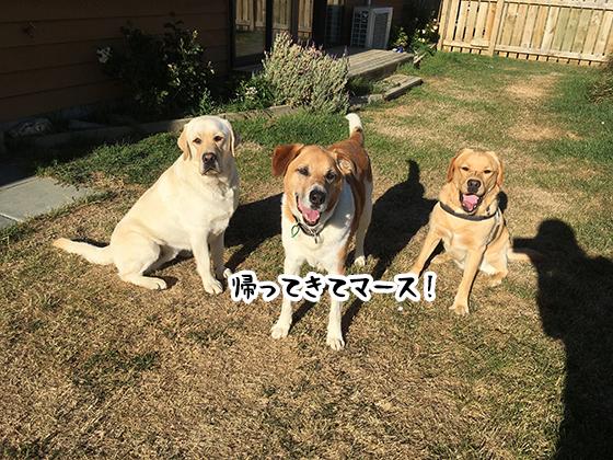 21022021_dogpic5.jpg