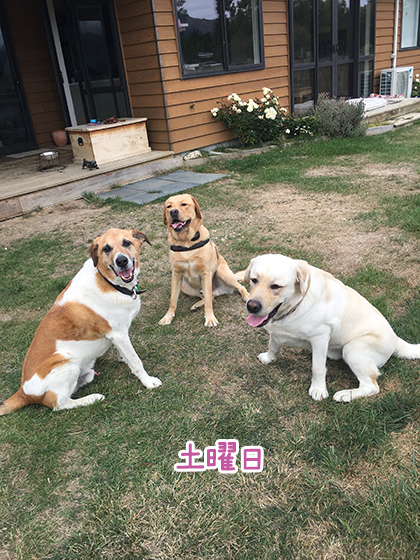 21032021_dogpic5.jpg