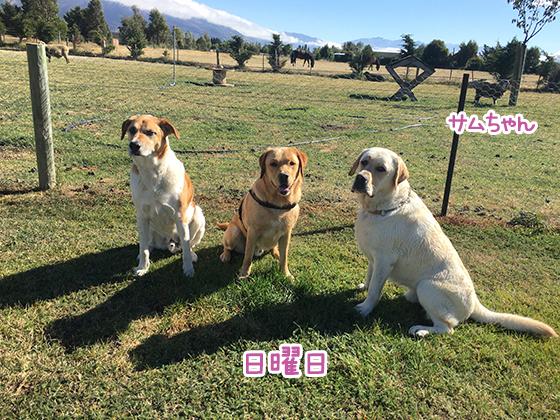 21032021_dogpic6.jpg