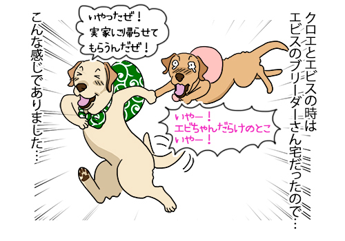 23032021_dog5.jpg