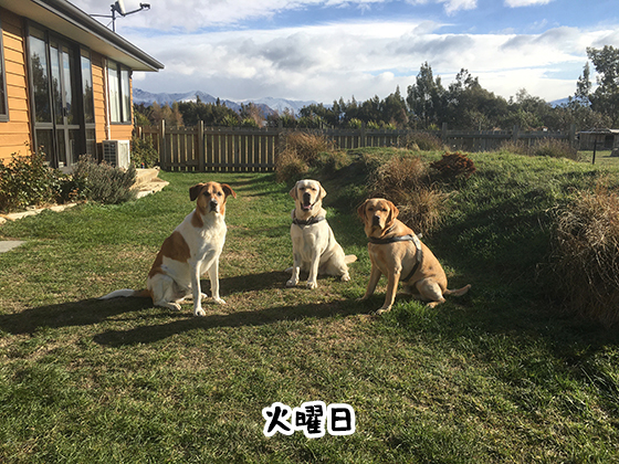 23052021_dog2Tuesday.jpg