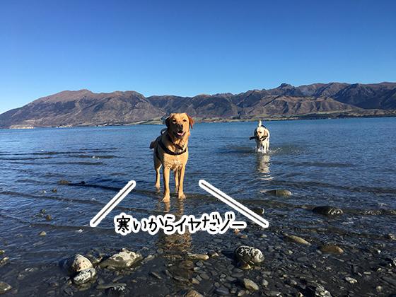 23052021_dogpic3.jpg