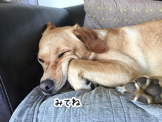 27022021_dogpic9.jpg