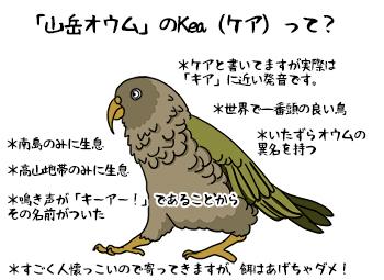 Kea_mini.jpg