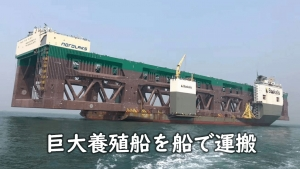 巨大養殖船を船で運搬