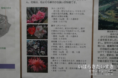 桃の花の種類。矢口、源平、寿星桃、菊桃。
