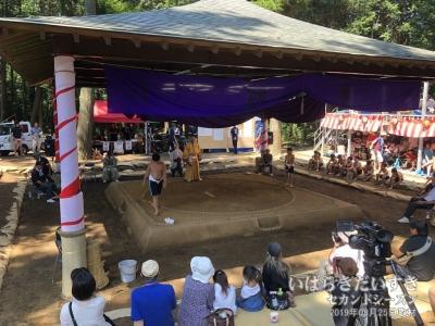 化蘇沼稲荷神社 夏祭り 奉納相撲