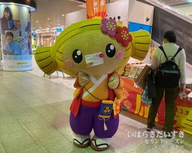 JR水戸駅改札前の物販は観光地っぽいけど、規模が小さい。写真はマスクを装着した水戸ちゃん(Ver.1.0)。