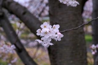 200401kamogawa(13).jpg