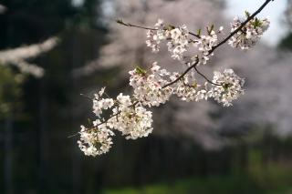 200404kamigamo(34).jpg