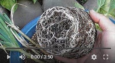 メロンの種まき動画2