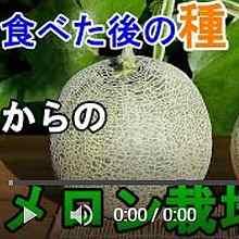 メロン種まき動画5
