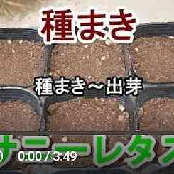 サニーレタス種まき動画