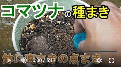 コマツナの鉢栽培動画1