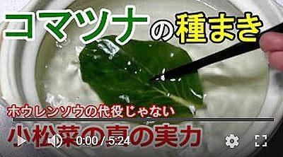 小松菜調理動画
