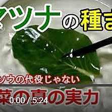 小松菜の調理法動画