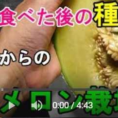 メロン栽培種まき動画
