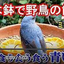 植木鉢バードフィーダーミカン編動画