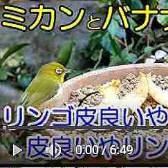 植木鉢バードフィーダー:リンゴ編
