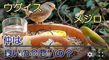 バードフィーダーミックス編動画