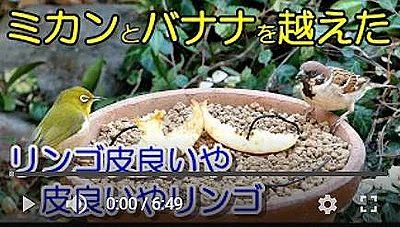 バードフィーダーリンゴ編動画