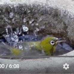 水浴び動画