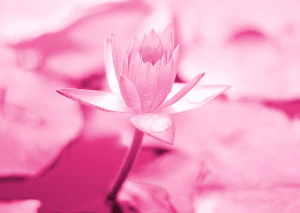 大逆転裁判1&2 メインビジュアル考察 ピンク 新世界に咲く花 Photo by Saffu on Unsplash