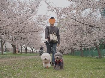 桜さんぽ20200328-2