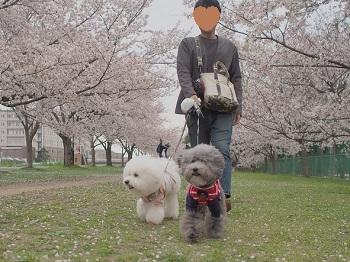 桜さんぽ20200328-3