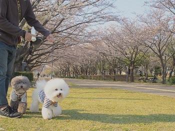 公園さんぽ20200404-1