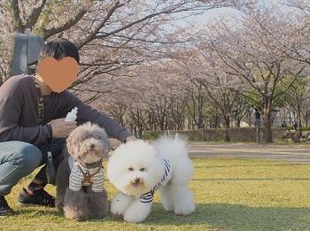公園さんぽ20200404-2