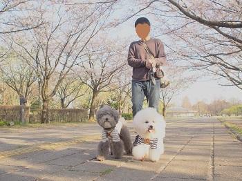 公園さんぽ20200404-3