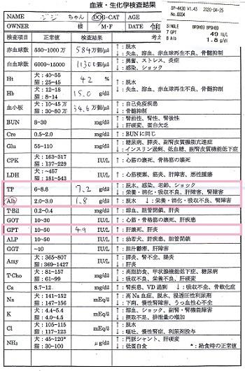 ジジ血液検査20200425 -