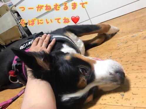 fc2blog_2020071221511578e.jpg