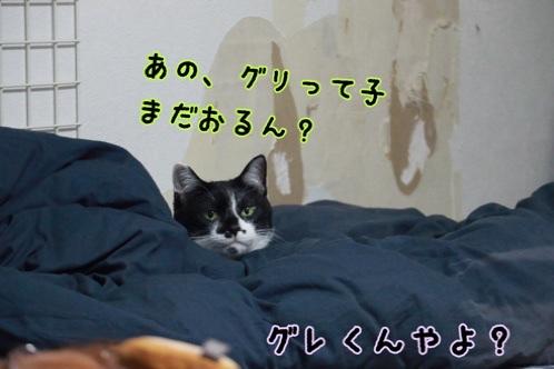 fc2blog_202009041629563cd.jpg